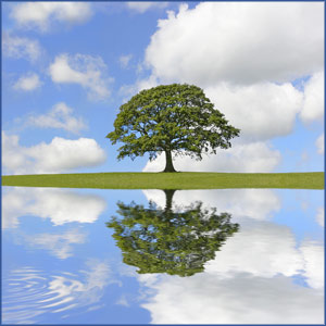 An oak tree in full leaf with sunny sky and white fluffy clouds, all reflected in still, clear water with a small rippled area at lower left corner